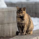 千歳町通りの小さな公園 ― いつもの猫