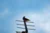 プロキャプチャー(Pro Capture)の試し撮り(鳥撮り版)-オリンパスOM-D E-M1 MarkⅡ-